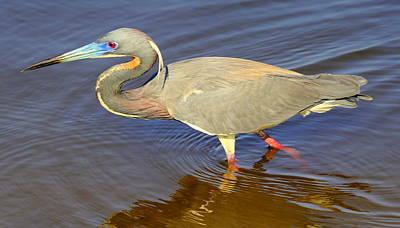 Af Vogue - Blue Heron by Sean Allen