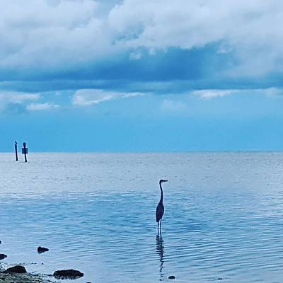 Ocean Photograph - Blue Heron Skies by Ric Schafer