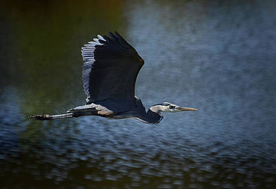 Blue Heron Skies  Art Print by Saija  Lehtonen