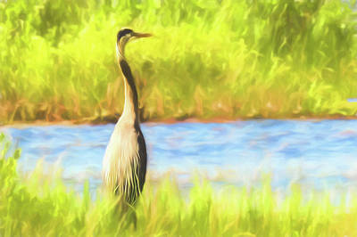 Digital Art - Blue Heron Standing Tall And Alert by Rusty R Smith