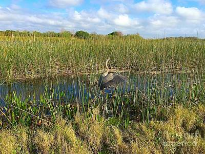 Photograph - Blue Heron Taking Flight by Anne Sands