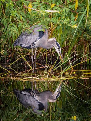 Heron Photograph - Blue Heron by Zina Stromberg