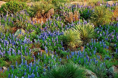 Photograph - Blue Hillside by Robert Anschutz