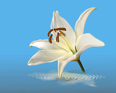 Garden Petal Image Photograph - Blue Horizons - White Lily by Gill Billington