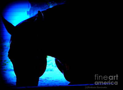 Photograph - Blue Horse by Rabiah Seminole