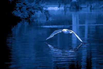Photograph - Blue Hour Seagull - 1 by Keith Boone