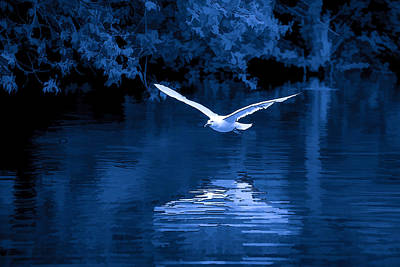 Photograph - Blue Hour Seagull - 2 by Keith Boone