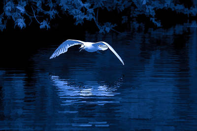 Photograph - Blue Hour Seagull - 3 by Keith Boone
