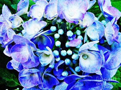 Photograph - Blue Hydrangea 5 by Sarah Loft