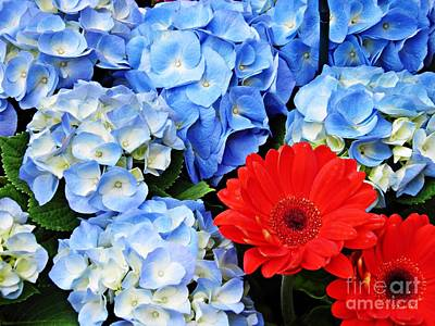 Gerbera Daisy Photograph - Blue Hydrangea And Red Gerbers by Sarah Loft