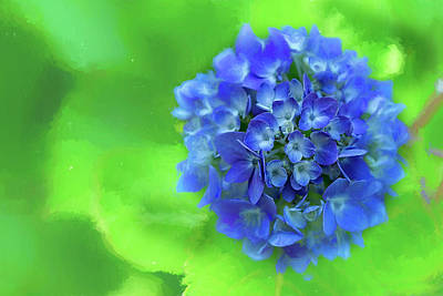Photograph - Blue Hydrangea Glow by Kay Brewer