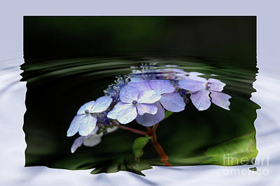 Photograph - Blue Hydrangea by Elaine Hunter