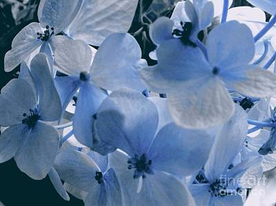 Photograph - Blue Hydrangea by Joan-Violet Stretch