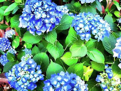 Photograph - Blue Hydrangea by Judy Palkimas