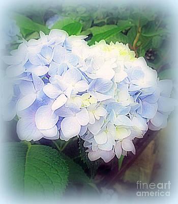 Photograph - Blue Hydrangea by Kay Novy