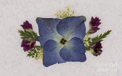 Photograph - Blue Hydrangea Pressed Floral Design by Em Witherspoon
