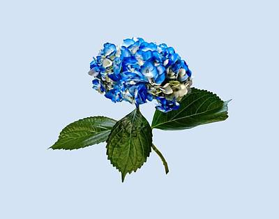 Photograph - Blue Hydrangea With Leaves by Susan Savad