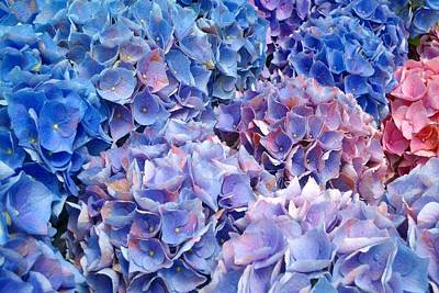 Photograph - Blue Hydrangeas 1 by Marianne Dow