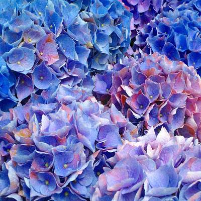 Photograph - Blue Hydrangeas 2 by Marianne Dow