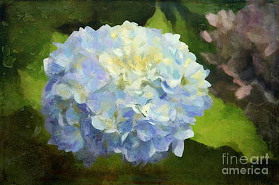 Photograph - Blue Hydrangeas - Bring On Spring Series by Andrea Anderegg
