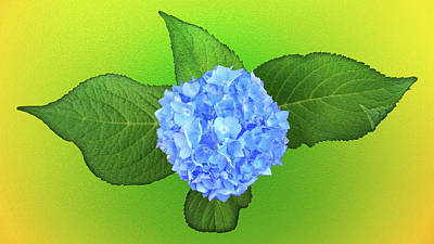 Photograph - Blue Hydrangea by Mike Breau