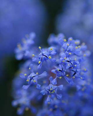 Photograph - Blue In Blue by Alexander Kunz