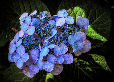 Photograph - Blue In Nature by Elaine Malott