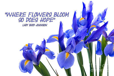 Photograph - Blue Iris Flower Border With Quote by Vizual Studio
