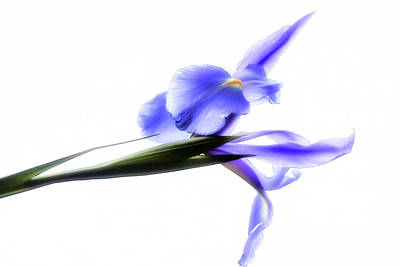 Photograph - Blue Iris For Irma by Beth Akerman