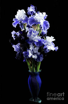 Photograph - Blue Iris by Louise Magno