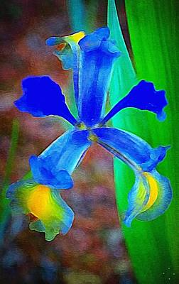 Photograph - Blue Iris by Paul Wilford