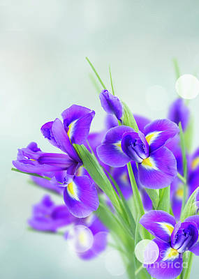 Photograph - Blue Irise Flowers by Anastasy Yarmolovich