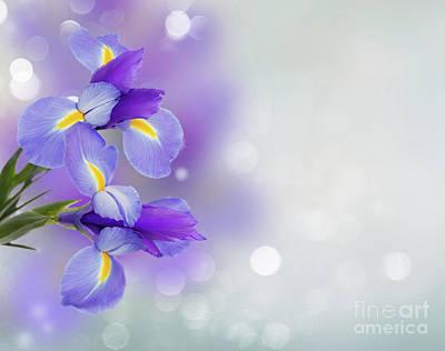 Photograph - Blue Symphony by Anastasy Yarmolovich