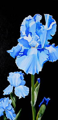Painting - Blue Irises by Betty-Anne McDonald
