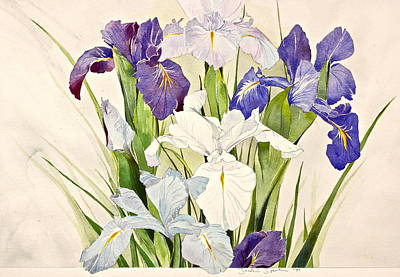 Blue Irises-posthumously Presented Paintings Of Sachi Spohn  Art Print by Cliff Spohn