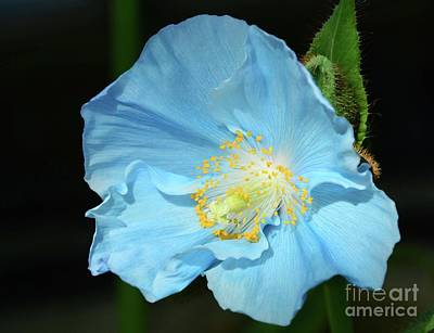 Photograph - Blue Is Your Color by Cindy Manero