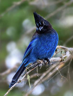 Photograph - Blue Jade  by John Poon