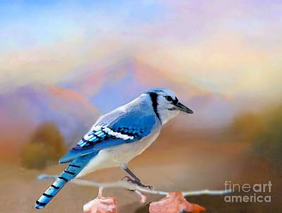Photograph - Blue Jay In The Oklahoma Hills by Janette Boyd