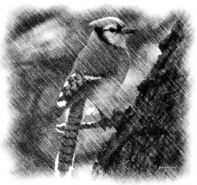 Digital Art - Blue Jay by Artful Oasis