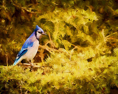 Photograph - Blue Jay At Twilight by Susan Rissi Tregoning
