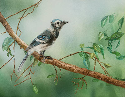 Painting - Blue Jay by Carol Hanna
