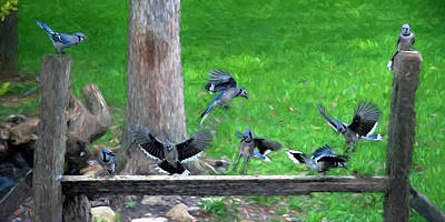 Photograph - Blue Jay Convention by Dan Friend