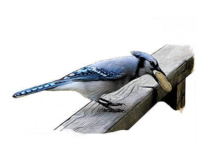 Digital Art - Blue Jay Eating Peanut by Yuichi Tanabe