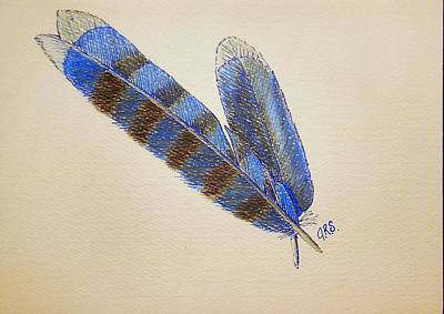 Bluejay Drawing - Blue Jay Feathers by J R Seymour
