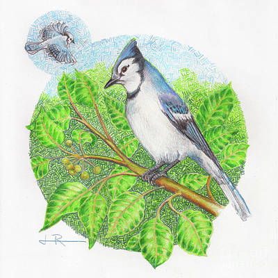 Archival Paper Drawing - Blue Jay In A Pear Tree by Jim Rehlin