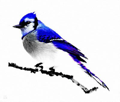 White Bird Painting - Blue Jay In Winter by Katrina Britt