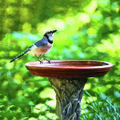 Digital Art - Blue Jay Just A Sip by Denise Beverly