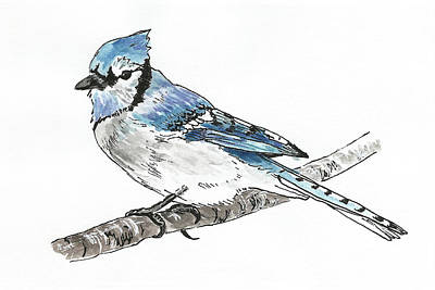 Painting - Blue Jay by Masha Batkova