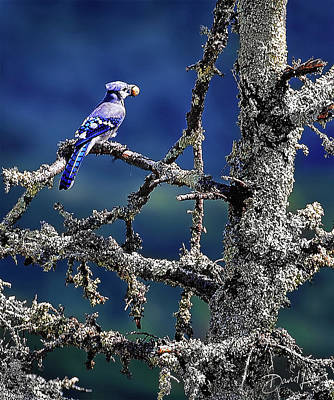 Photograph - Blue Jay Mountain by David A Lane