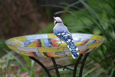 Photograph - Blue Jay On Birdbath 5 by Aimee L Maher Photography and Art Visit ALMGallerydotcom